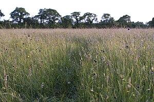 Mottey Meadows - Image: Mottey
