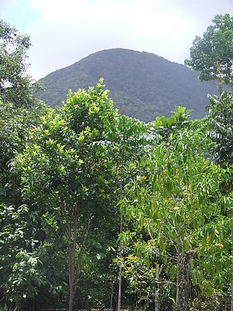 Cape Tribulation, Queensland - Mount Sorrow, viewed from the main highway.