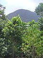 Mount Sorrow, Cape Tribulation, QLD.JPG