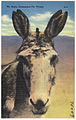 Mr. Burro, earmarked for victory.jpg