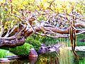 Mt Cootha Lizard.jpg