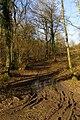 Muddy track, Knighton Wood - geograph.org.uk - 672958.jpg