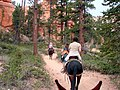 Mule Ride, Bryce Canyon (5882145474).jpg
