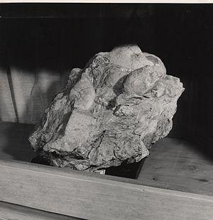 Esino Lario - Fossils preserved in the Museum of Grigne