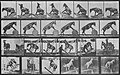 Muybridge, Eadweard - Denver macht verschiedene Kunststücken (Zeno Fotografie).jpg