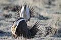 My Public Lands Roadtrip- Wildlife in Wyoming (19912487255).jpg