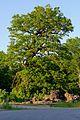 ND WL 00001 2 Stieleichen, östlichere Eiche, Stelle, Landkreis, Harburg, Niedersachsen, Ansicht aus Südwest.jpg