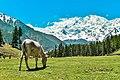 Nanga Parbat,Fairy Meadows.jpg