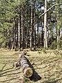 Nationaal Park Kennemerland (40656703424).jpg