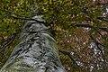 Naturdenkmal Rot Eiche.jpg