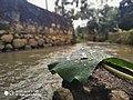 Nature beauty of Kerala.jpg