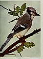 Nature neighbors, embracing birds, plants, animals, minerals, in natural colors by color photography, containing articles by Gerald Alan Abbott, Dr. Albert Schneider, William Kerr Higley...and other (14564531267).jpg