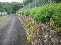 Natursteinmauer - extrem schön - panoramio.jpg