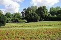 Naumburg Rosengarten.jpg