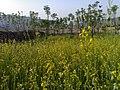 Navidhand Valley, Khyber Pakhtunkhwa, Pakistan - panoramio (21).jpg