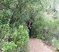 Nesher, Park Nesher, Wadi Katia 049.JPG