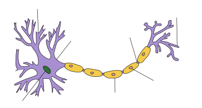 Neuron Hand-tuned.svg