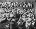 Newberry County, South Carolina. Flock of White Leghorn Pullets 10 weeks old owned by J. C. Epting, . . . - NARA - 522680.tif