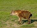Ngorongoro (21) (13962136520).jpg