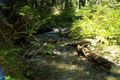 North Fork Skykomish Trail 0208.jpg