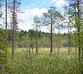 Nyrölä - swamp.jpg