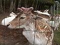 Oaklawn Farm Zoo, May 16 2009 (3538903405).jpg