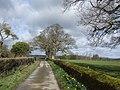 Oaks and daffodils - geograph.org.uk - 349043.jpg