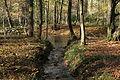 Odenthal - Naturschutzgebiet Dhünnaue - Dhünn+Unterer Bülsberger Siefen 01 ies.jpg