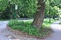 Oestervenn SHS *Trauerbaum* - panoramio.jpg
