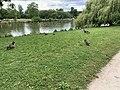 Oiseaux Île Bercy Paris 1.jpg