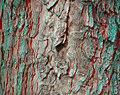 Old bark anaglyph.jpg