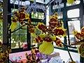 Orquidea na estufa do Solar do Jambeiro - panoramio.jpg