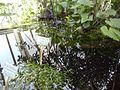 Orto botanico di Napoli 46.jpg
