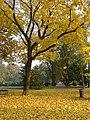 Osijek, Park kralja Petra KrešimiraIV.jpg