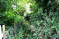 Overgrown path - geograph.org.uk - 472652.jpg