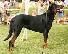 Gifts for Beauceron Dog Lovers