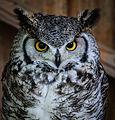 Owls @ Dragonheart, Enschede (9549540044).jpg