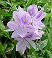 P1010935 - Flickr - gailhampshire (1).jpg