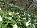 P4220387 Земле квітуча.JPG