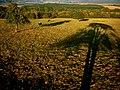 Paša dlhých tieňov - panoramio.jpg