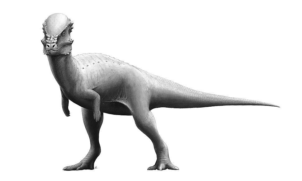 Pachycephalosaurus Reconstruction