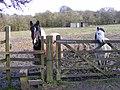 Paddock Horses - geograph.org.uk - 1228810.jpg