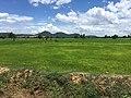 Paddy fields near Battambang.jpg
