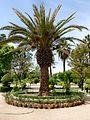 Palmtree (3099390665).jpg