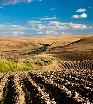 Dryland farming - Fields in the Palouse, Washington State