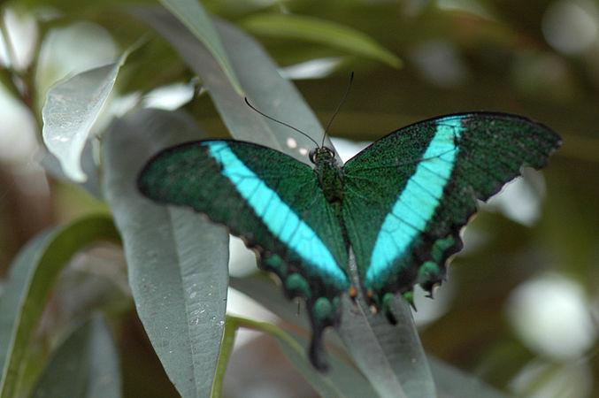 Papillon Hunawihr 6.jpeg