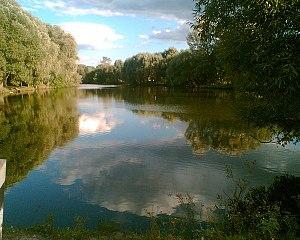 Pochepsky District - A pond in the village of Papsuyevka, Pochepsky District