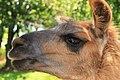 """Parcul de Animale - """"Moara de Vant"""" (7403422572).jpg"""