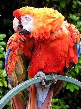 Часть 3 - Попугаи.  До чего же красивая птица.  Калибри.
