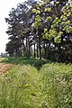 Part of Lodge Plantation and footpath - geograph.org.uk - 456133.jpg